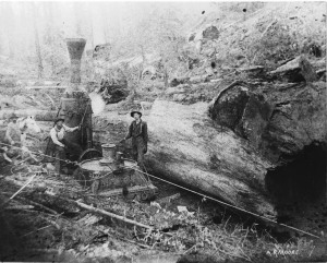 "Ike Putnam Standing on steam donkey near the Sequoia""s circa. 1910"
